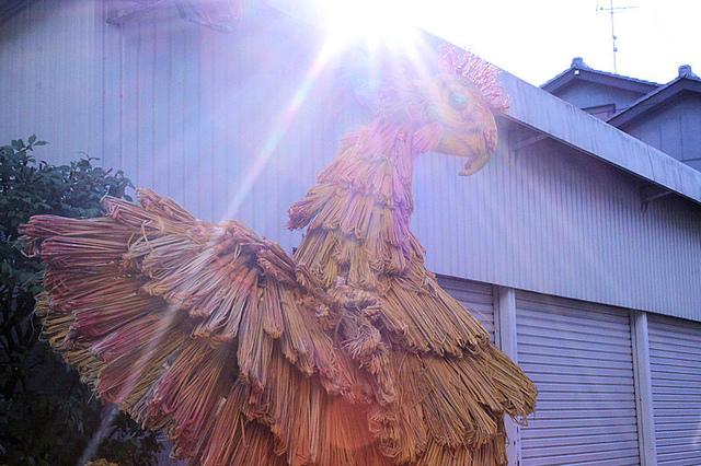 逆光の鳳凰